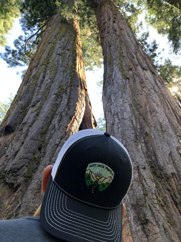 sequoia trees